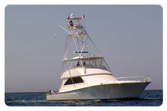 Cabo San Lucas Charters - Viking